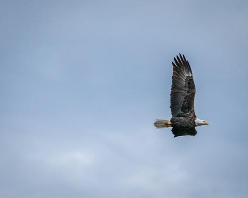 Eagles 646 i4nq6z