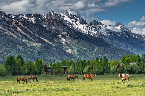 Horse ranch in jackson hole rgoyha