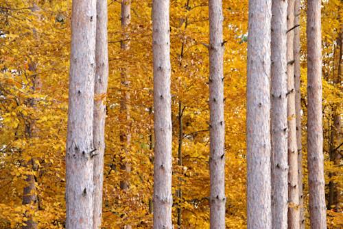 Dsc09015 trees b5xoll