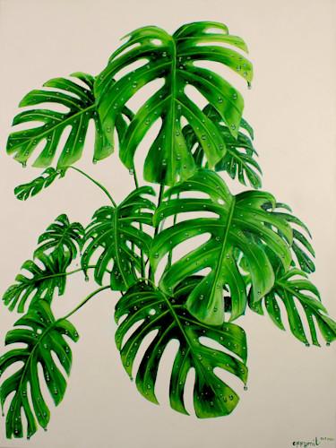 Monstera deliciosa plant r5dpzz