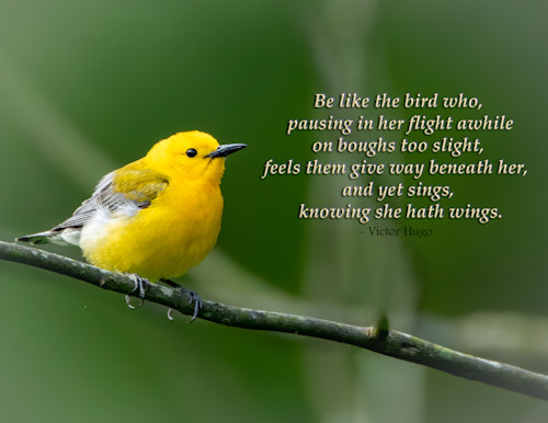 Be like the bird..knowing she hath wings t2vvb5