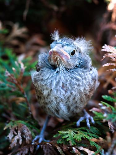 Einstein chippingsparrow 1531 huubkw