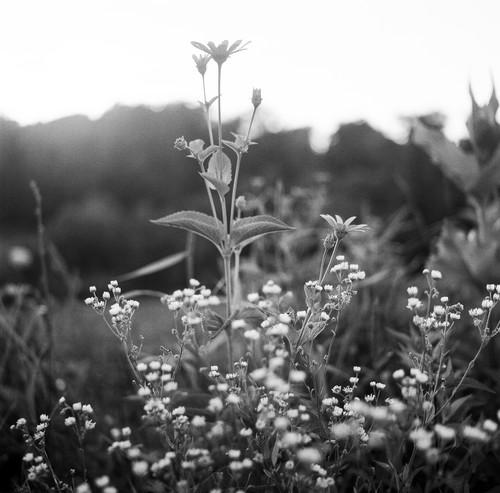 Virginia wildflowers c3bcst