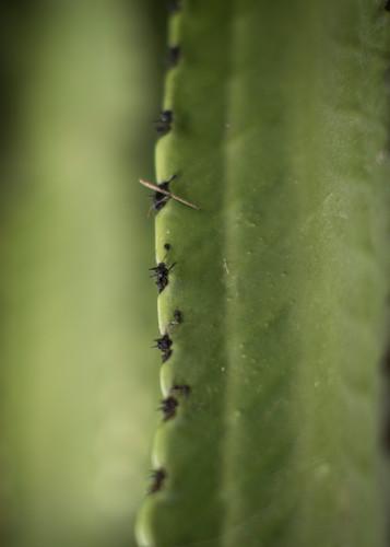 California cactus 3 jdutje