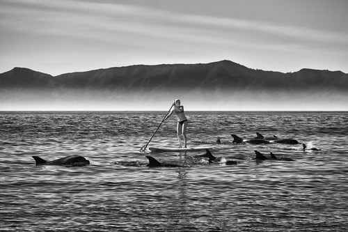 Jkp14 5676 paddle boarder with dolphins 3 copy w1gyjm