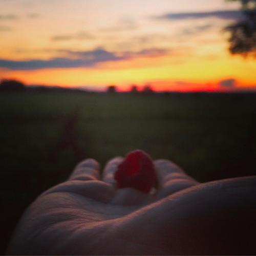 Raspberry sunset mariestephensart aezkyp