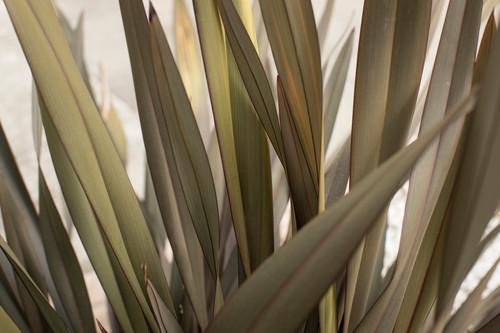 California grass 2 f0rmb6