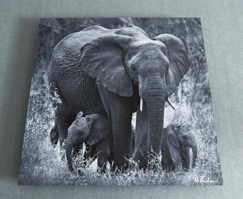 Elephant with babies 12x12 metal qhhsab