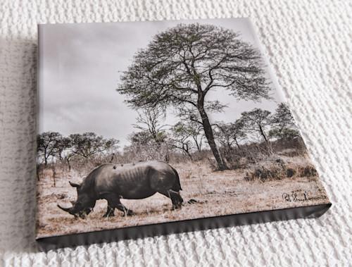 Rhinocerous 12x12 canvas n5p0i8