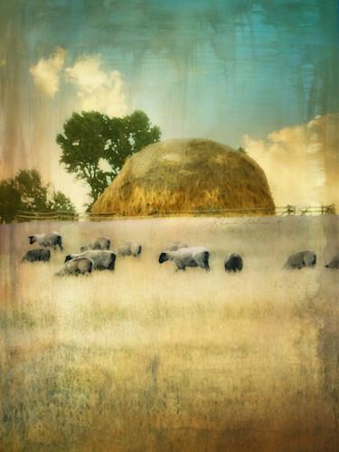 Sheep v new s awdevt