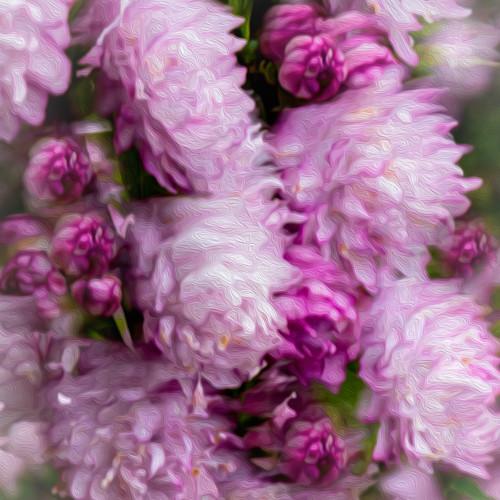 Pink blooms square vpb8v2