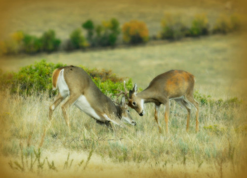 Bucks fall colors s zur31q