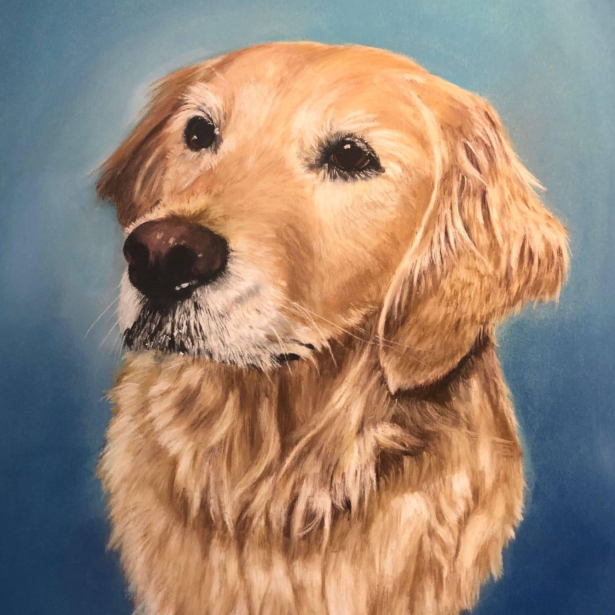 Pet Portraits by Joe Brewer