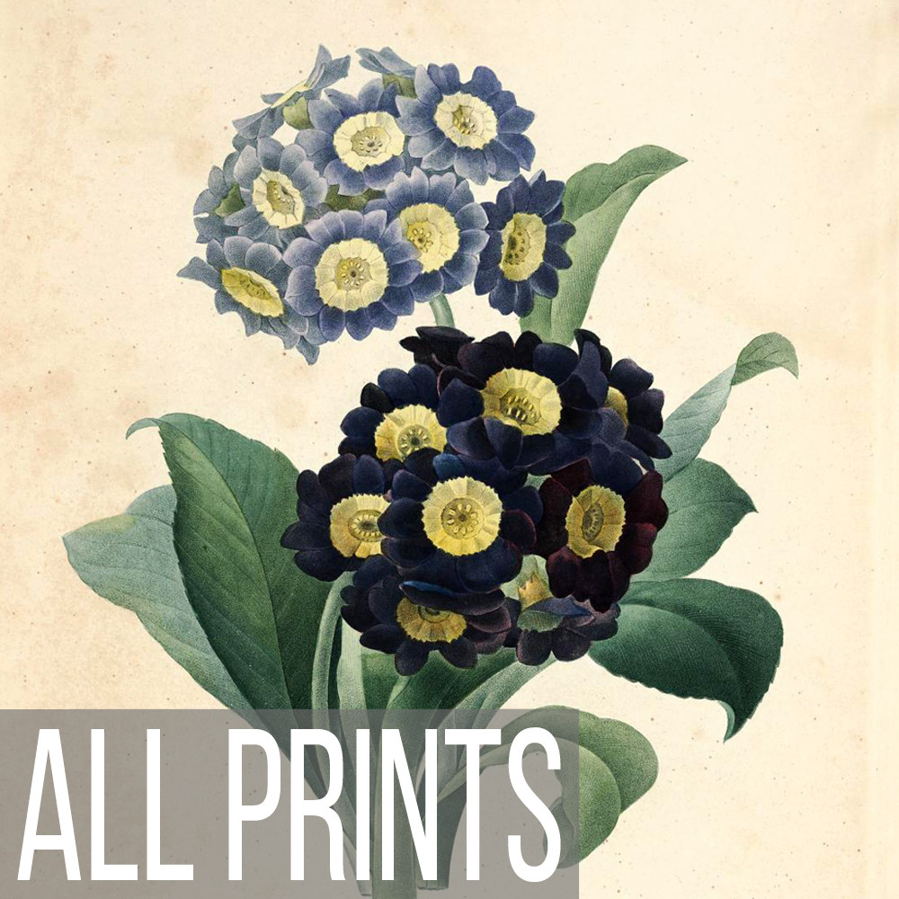 All botanical print illustrations of flowers, fruit, plants