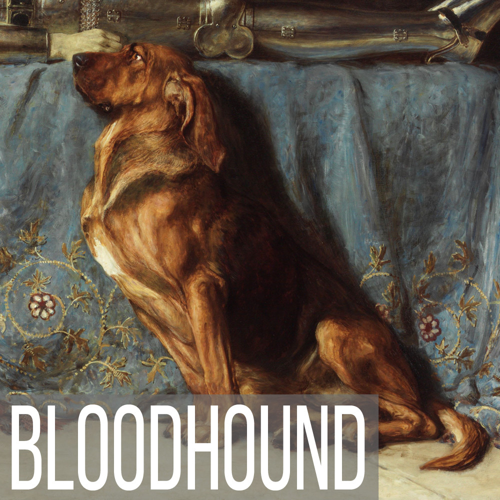 Bloodhound art print reproductions