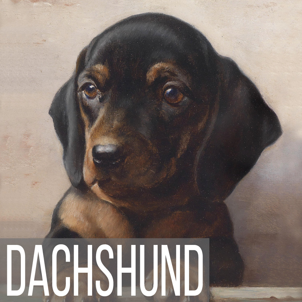 Dachshund art print reproductions