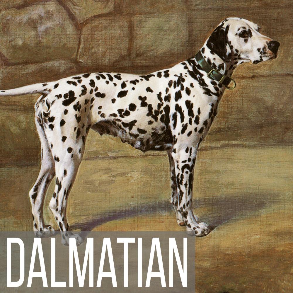 Dalmatian art print reproduction