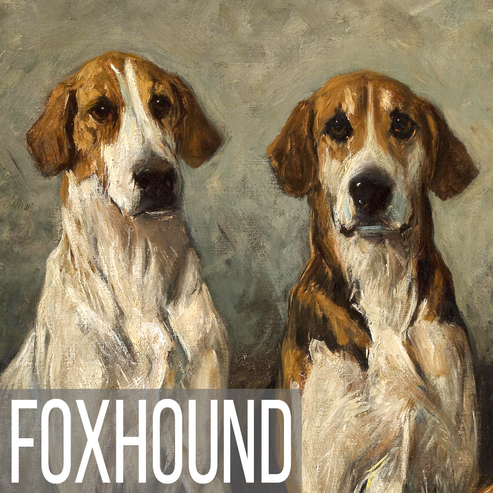 Foxhound art print reproductions