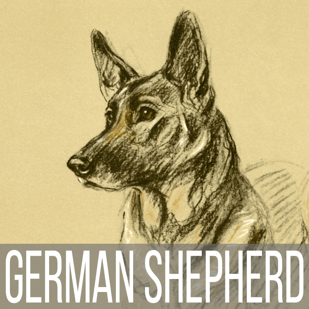 German Shepherd art print reproductions