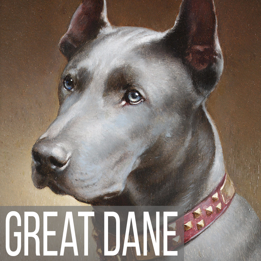 Great Dane art print reproductions