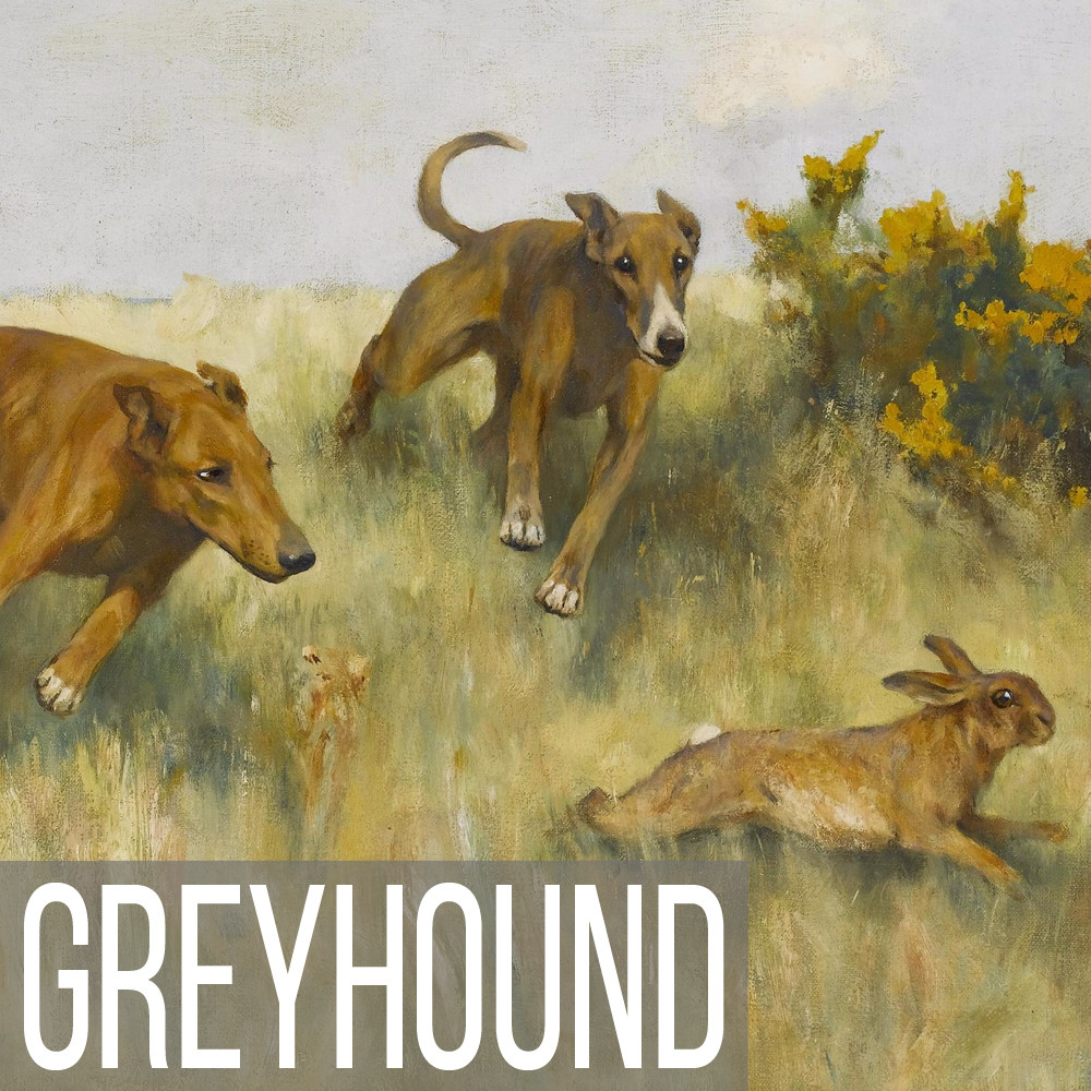 Greyhound art print reproductions