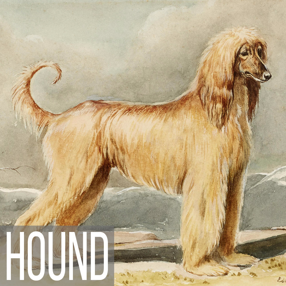 Hound art print reproductions