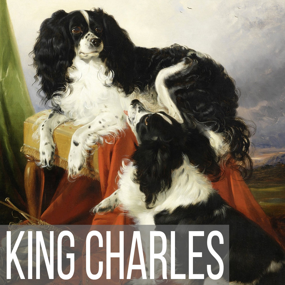 King Charles Spaniel art print reproductions