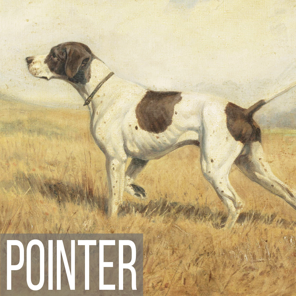 Pointer art print reproductions