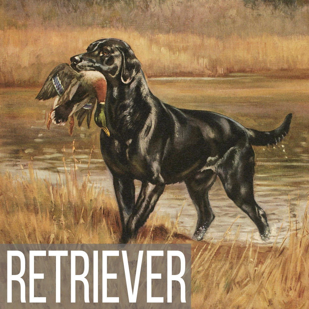 Retriever art print reproductions