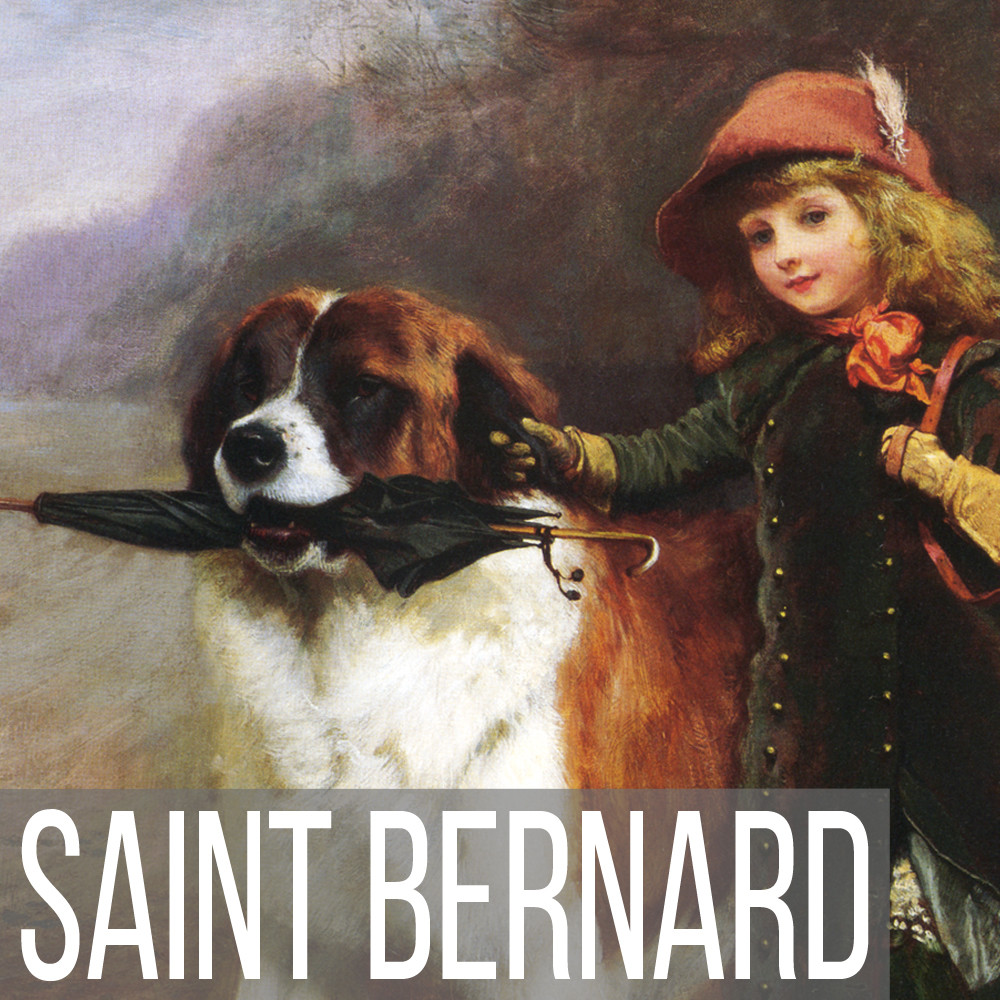 Saint Bernard art print reproductions