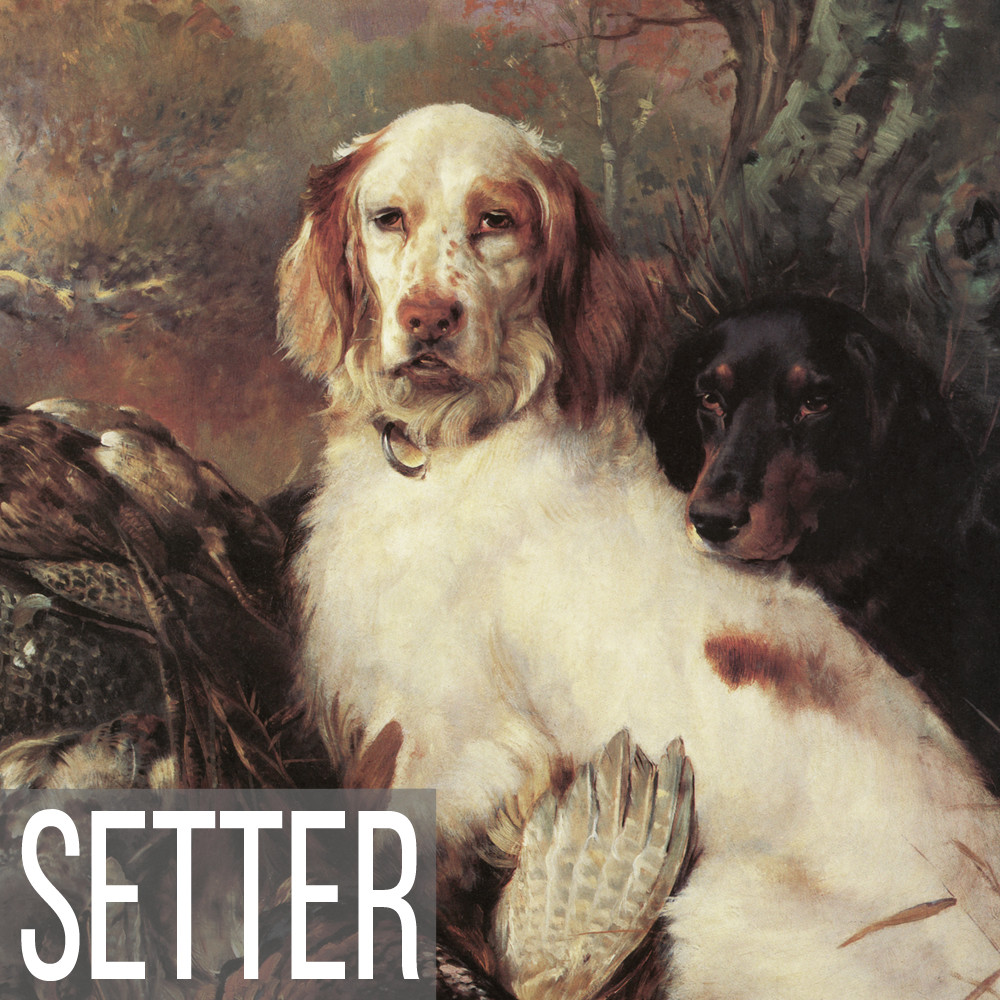 Setter art print reproductions