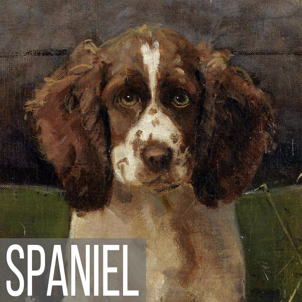 Spaniel art print reproductions