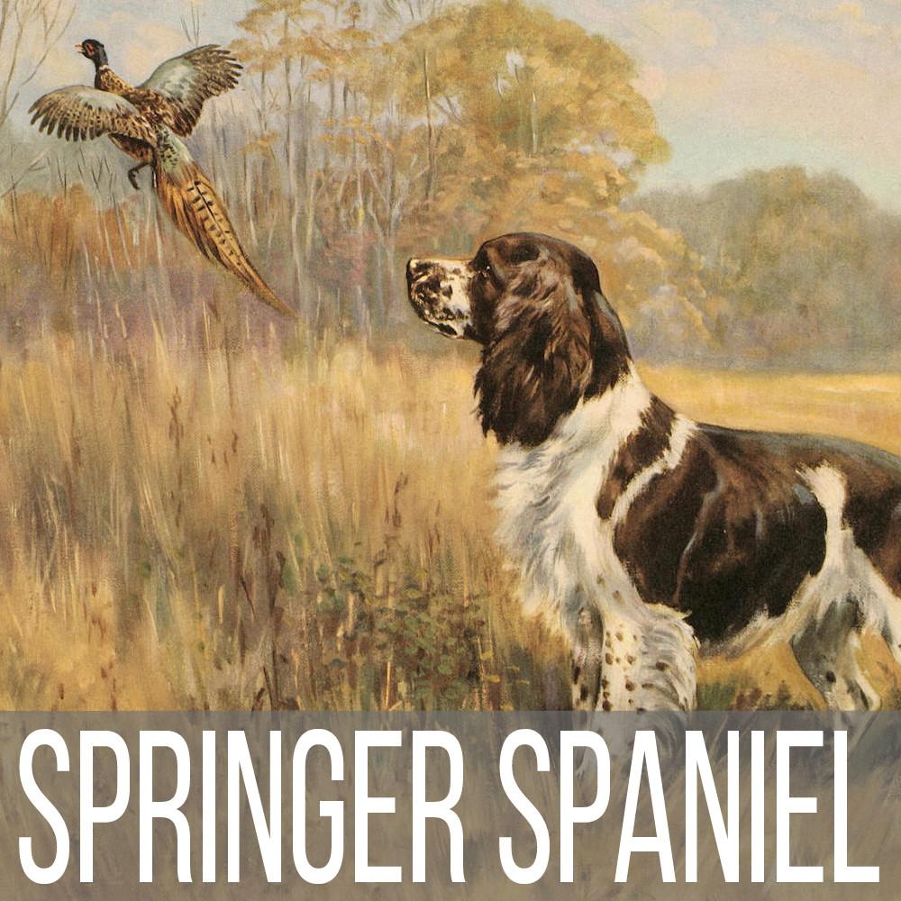 Springer Spaniel art print reproductions