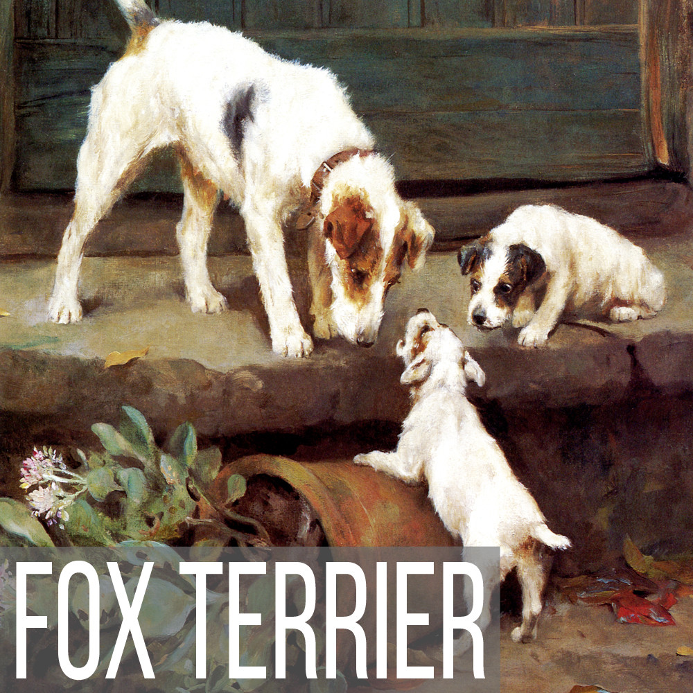 Fox Terrier art print reproductions