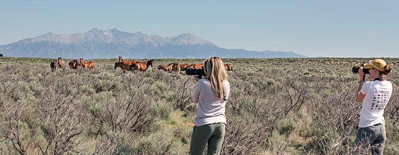 Wild Horse Photo Tour