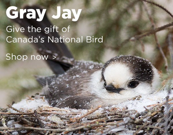 Shop Gray Jay