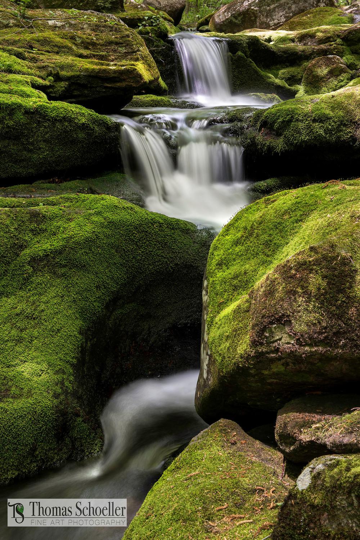 Connecticut's hidden Falls Brook cascades through verdant moss