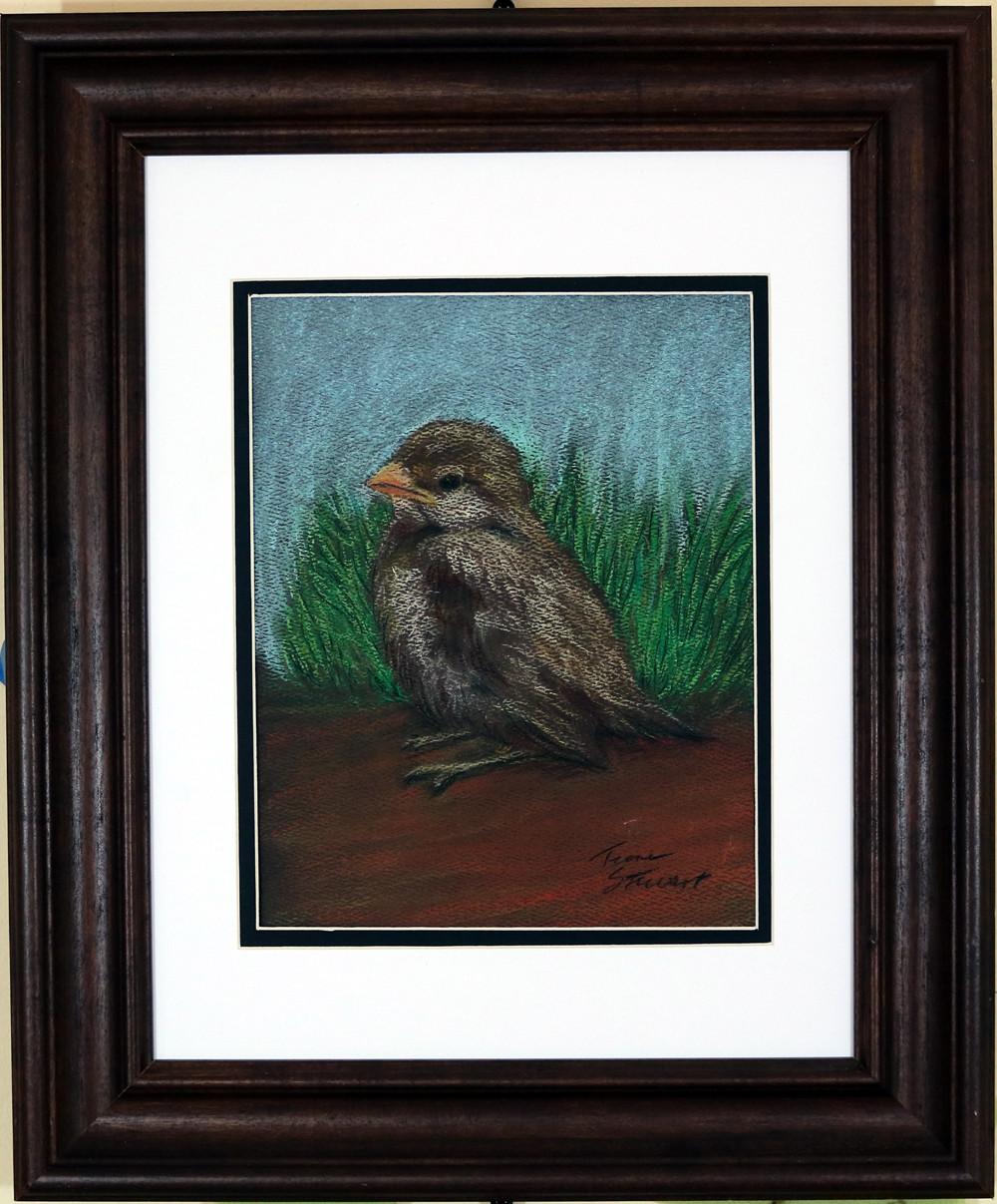 Baby Sparrow 2