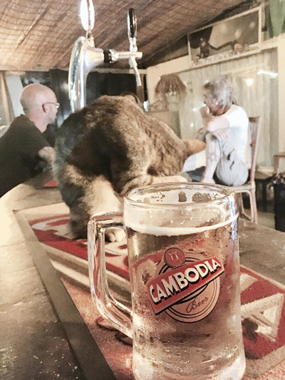 A little cat sits on a bar in Siem Reap, Cambodia