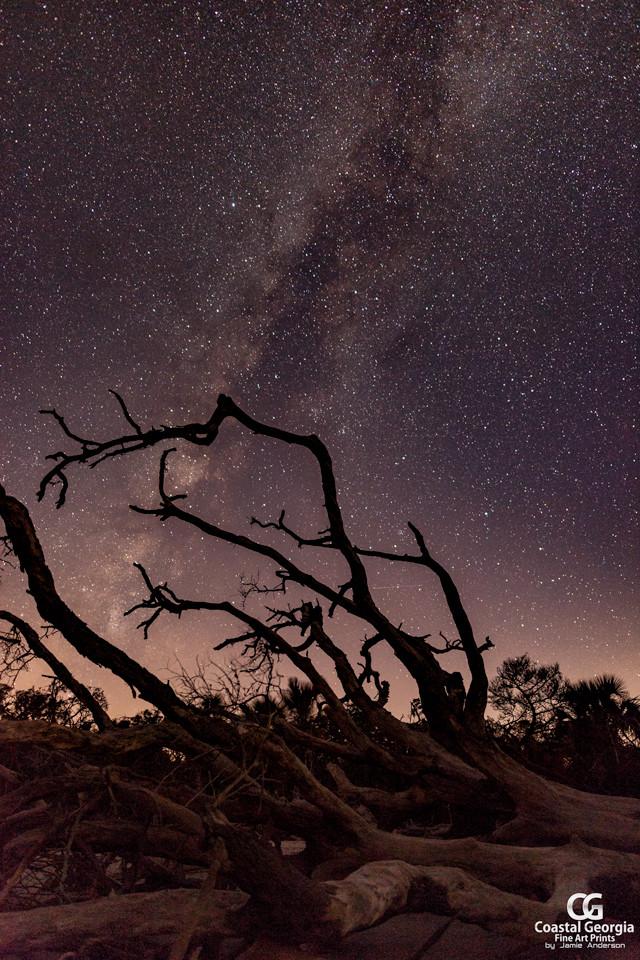 Ossabaw Island at Night