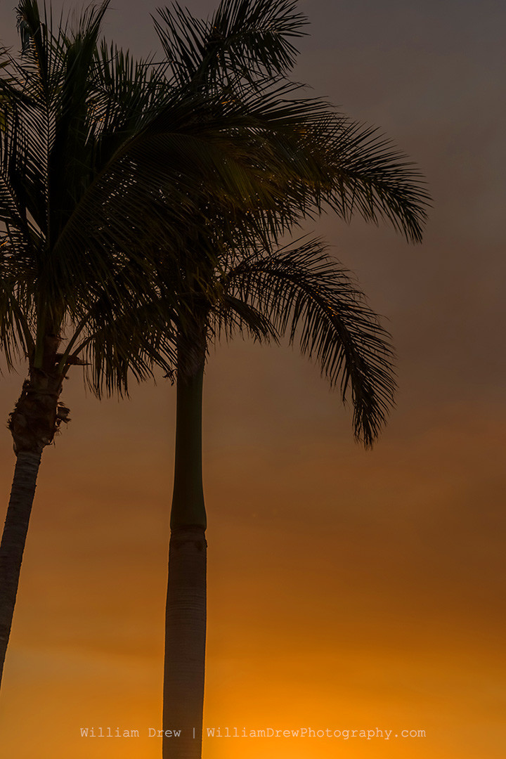 Tropical Sunset 3 - Florida Photographs | William Drew Photography