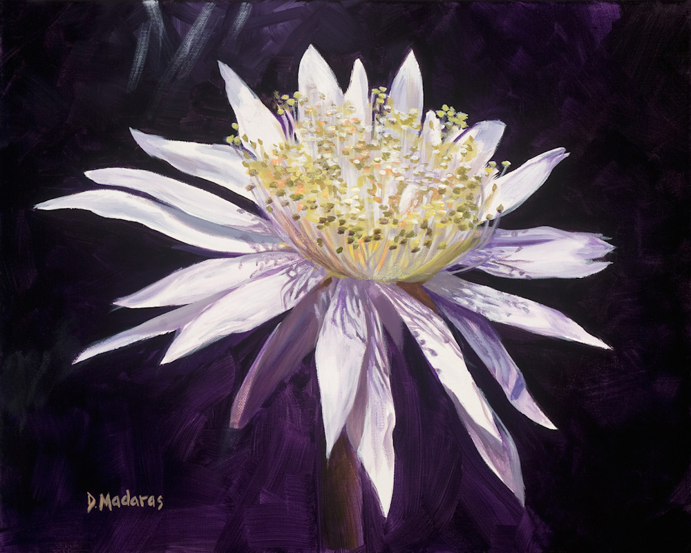 Night Blooming Cereus III | Southwest Art | Diana Madaras