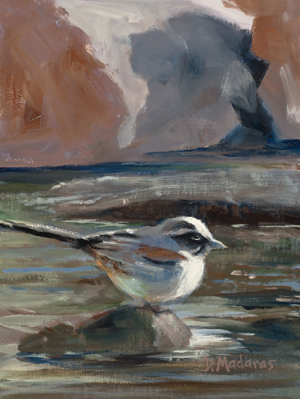Bird in the Canyon | Southwest Art Gallery Tucson | Diana Madaras