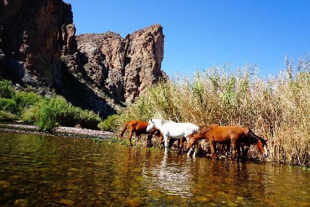 Southwest Art Gallery Tucson   Saguaro Lake Ranch 12