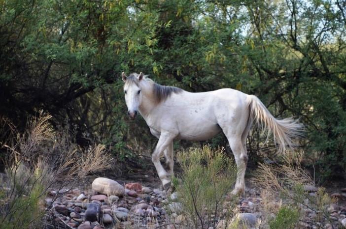 Southwest Art Gallery Tucson   Saguaro Lake Ranch 19