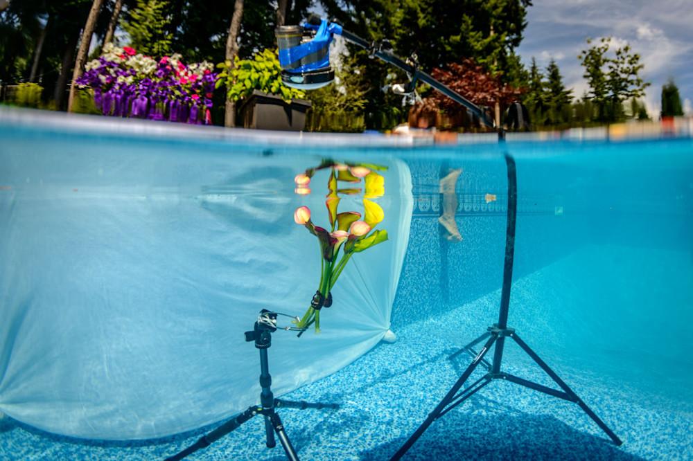 set up in pool fro shooting underwater flower series