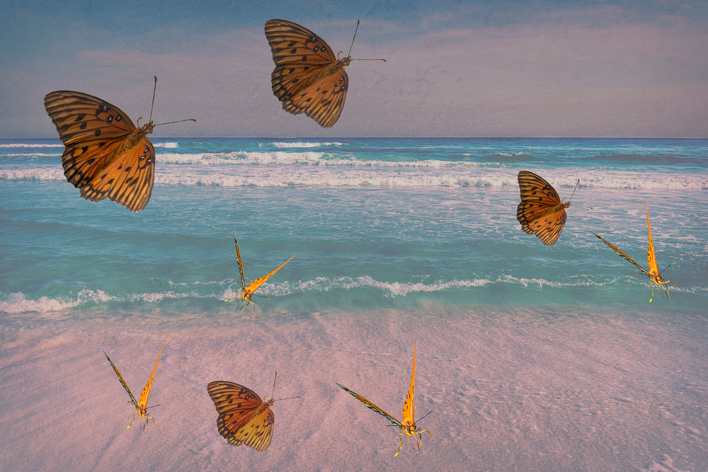 Butterflies on Beach