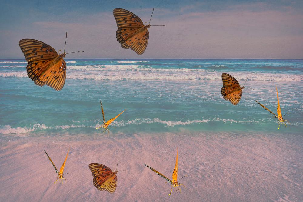 Colorful beach butterflies