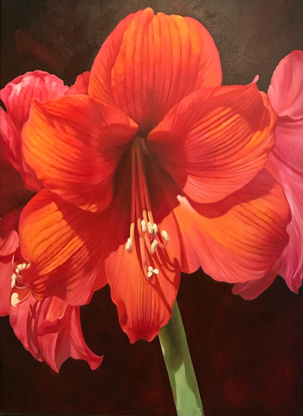 One Red Amaryllis | Southwest Art Gallery Tuson | Brenda Semanick