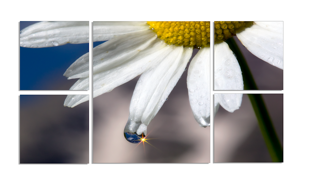 Polytych Nature Wall Art | Robbie George Photography